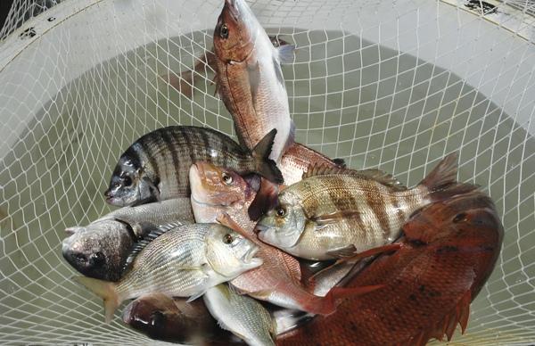 kokias žuvis valgyti sergant hipertenzija